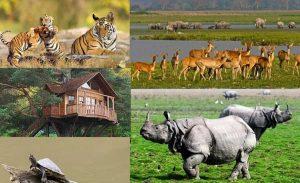 National Parks In Assam