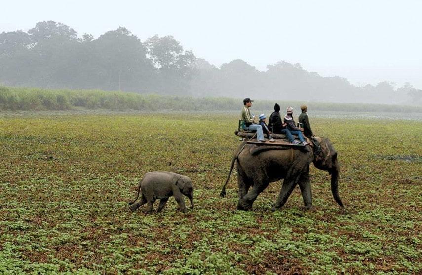 National Parks Are In Assam - Kaziranga National Park