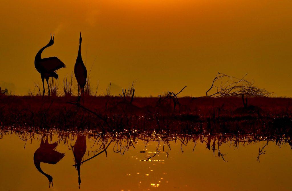 Wildlife Sanctuaries in Dholpur